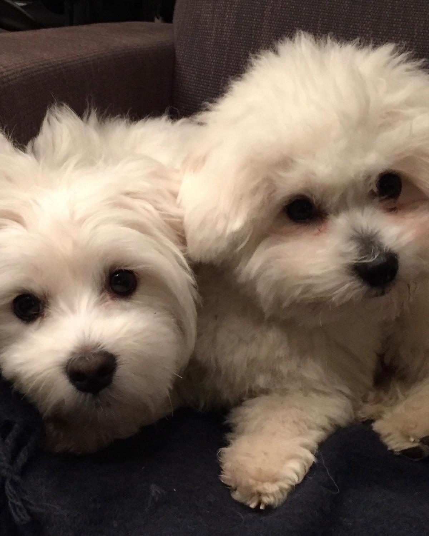 vrolijke hondjes