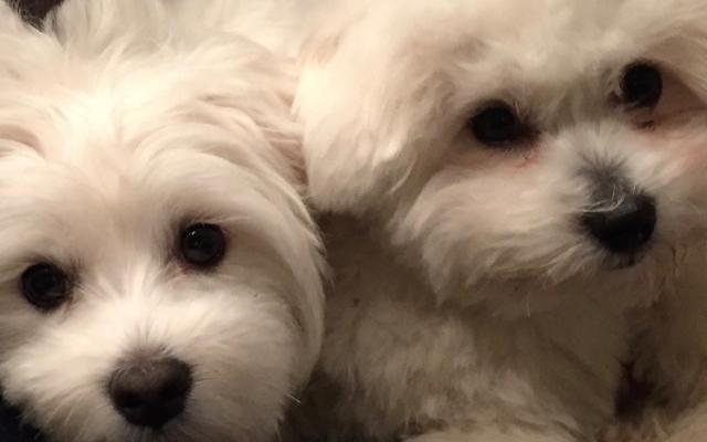 Witte hondjes zijn leuk